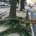 Verde pubblico allo sbando, Attivisti a 5 Stelle denunciano