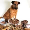 L'alimentazione canina, a Bisceglie incontro con un superesperto