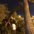 Grosso ramo d'albero cede in piazza Vittorio Emanuele