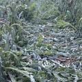 """Maltempo, Coldiretti:  """"Shock termici, 15 mln di euro di danni """""""