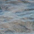 Presenza discreta di alga tossica a Bisceglie secondo gli ultimi rilievi dell'Arpa