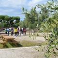 L'agricampeggio Brezza tra gli ulivi riconosciuto Masseria Didattica di Puglia