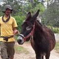Il pellegrino portoghese Bruno Dias a Bisceglie con l'asinella Salam