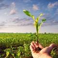 Credito d'imposta e Nuova Sabatini in agricoltura