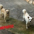 SOS per Bianca e Stella, le cagnette sparite in via Ruvo