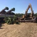 Ex Colonnello Carabinieri dona 100 alberi alla comunità