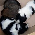 Le Guardie Ambientali ritrovano quattro cagnolini abbandonati