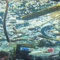 Più pesci o più plastica? Il videoreportage dei 5 stelle nel mare di Bisceglie