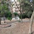 Lezione di yoga al Giardino Botanico Veneziani