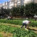 Una merenda nell'orto urbano per brindare all'inclusione sociale e chiudere i rubinetti dell'irrigazione