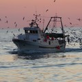 Da lunedì 13 agosto blocco delle attività di pesca per tutto l'Adriatico