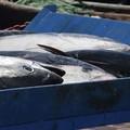 """Bando del Gal  """"Ponte Lama """", finanziamenti per la vendita diretta nel settore pesca"""