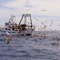 Pesca, Flai Cgil Bat chiede la convocazione di un tavolo