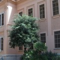 Un albero per ogni alloggiamento di via Monte San Michele