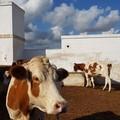 """Coldiretti Puglia: « """"Spariti """" 92mila animali in cinque anni»"""