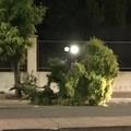 Grosso ramo d'albero caduto in via Fragata