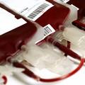 Domenica donazione di sangue promossa dalla sezione Avis Bisceglie