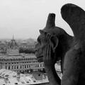 Sognando Notre Dame:  gli studenti aspettano Natale con un musical