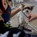 Toelettature chiuse in zona rossa, la protesta: «Impensabile non poter lavare gli animali per un mese»