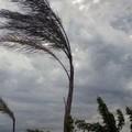 Allerta meteo arancione per vento forte