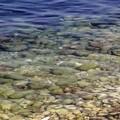 Alga tossica, le analisi dell'Arpa che non servono