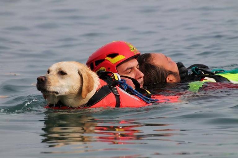 Cane da salvataggio