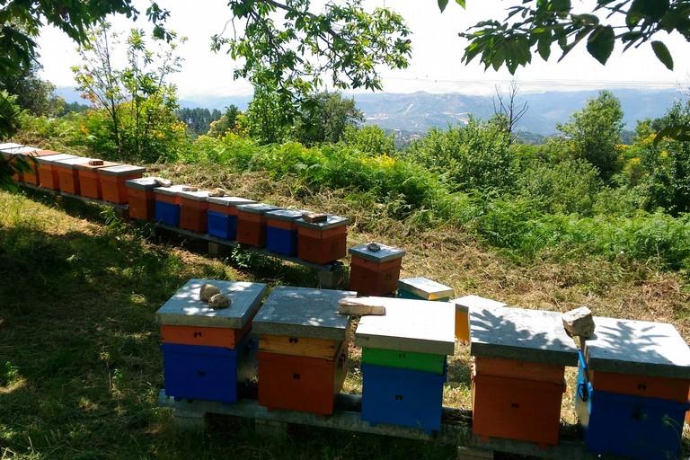 Casette delle api