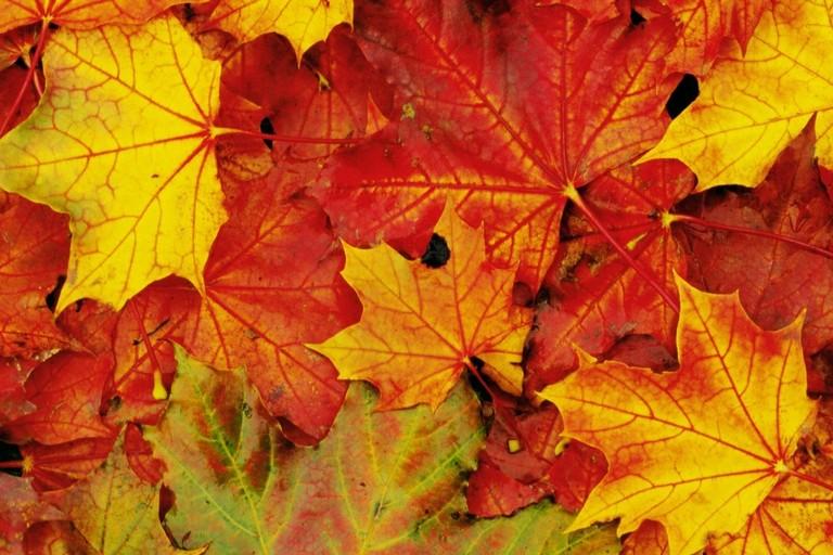 Le foglie d'autunno