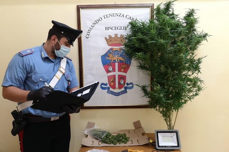 La droga sequestrata dai Carabinieri della Tenenza di Bisceglie