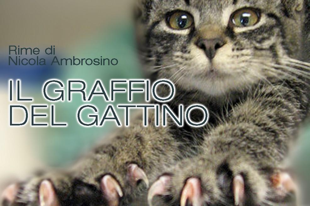 Il graffio del gattino