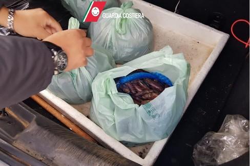 Biscegliese bloccato a Santo Spirito con 40 kg di datteri di mare