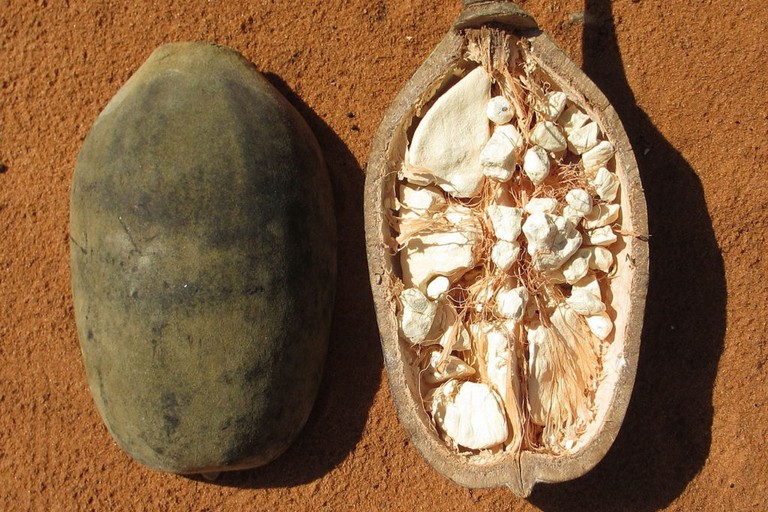 Semi di baobab