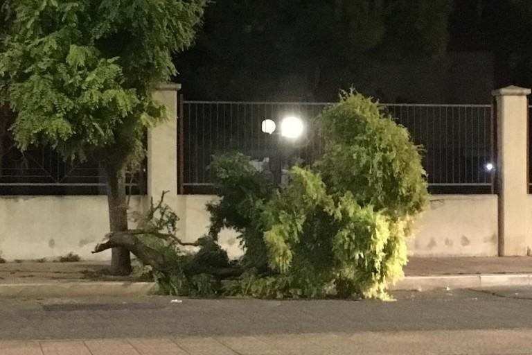Il ramo dell'albero staccatosi in via Fragata