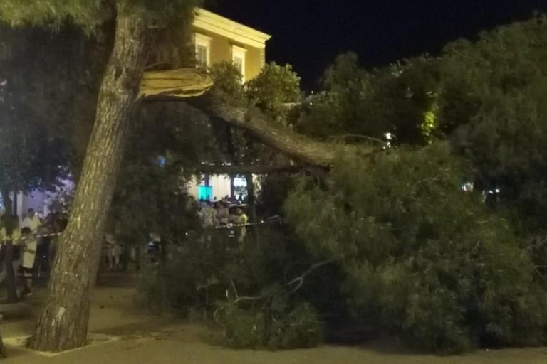 Il punto esatto in cui il ramo si è spezzato