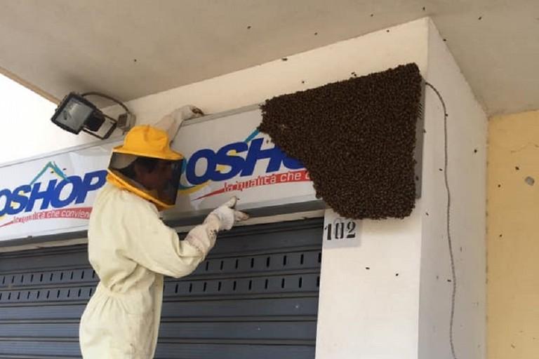 Lo sciame d'api recuperato in via Sant'Andrea