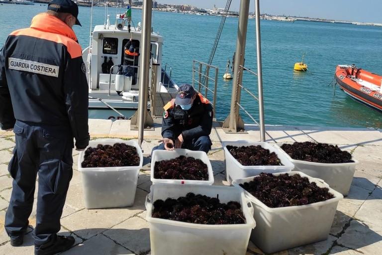 Ricci di mare sequestrati dalla Guardia Costiera a Bisceglie