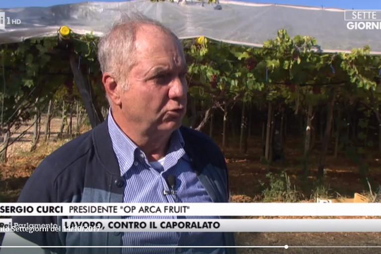 Sergio Curci a Rai Parlamento: si parla di caporalato in agricoltura