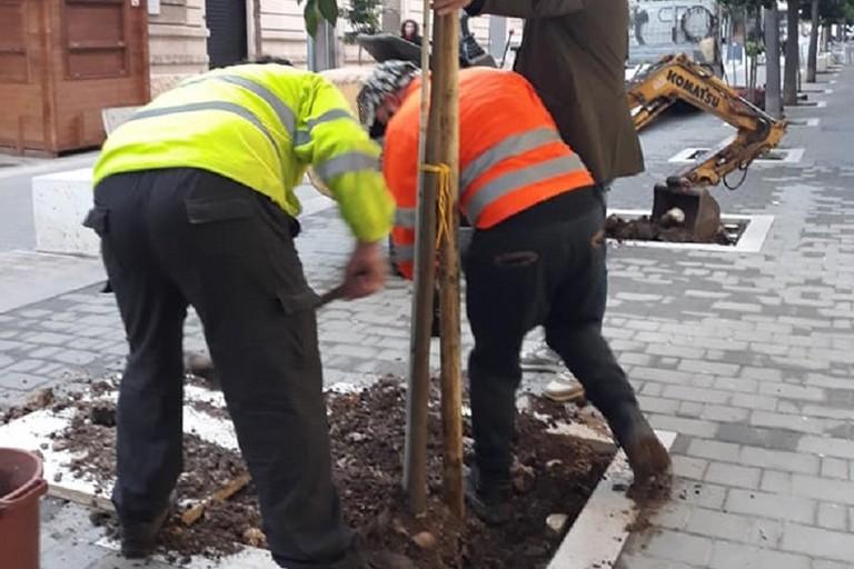 Operazioni di piantumazione di due alberi in via Aldo Moro