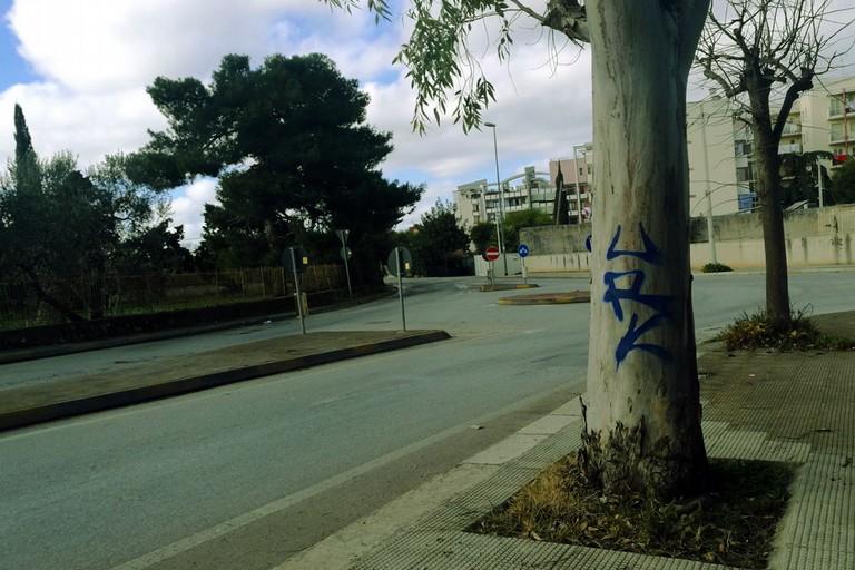 Albero con graffito